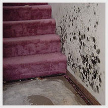 Mold remediation and water damage in chicago
