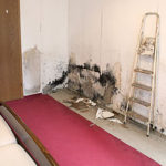 Mold removal in chicago