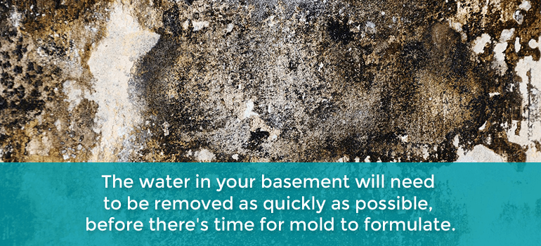 inspect basement for mold