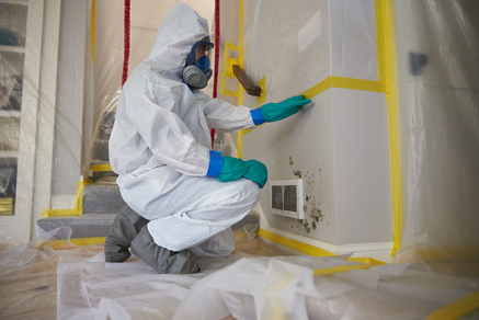 Mold remdiation and removal chicago